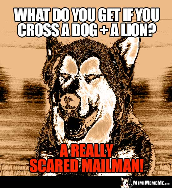 Dog Riddle: What do you get if you cross a dog + a lion? A really scared mailman!
