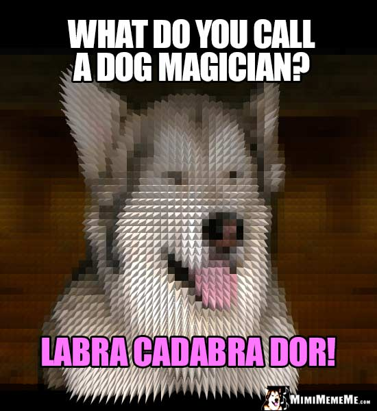 Dog Breed Joke: What do you call a dog magician? Labra Cadabra Dor!