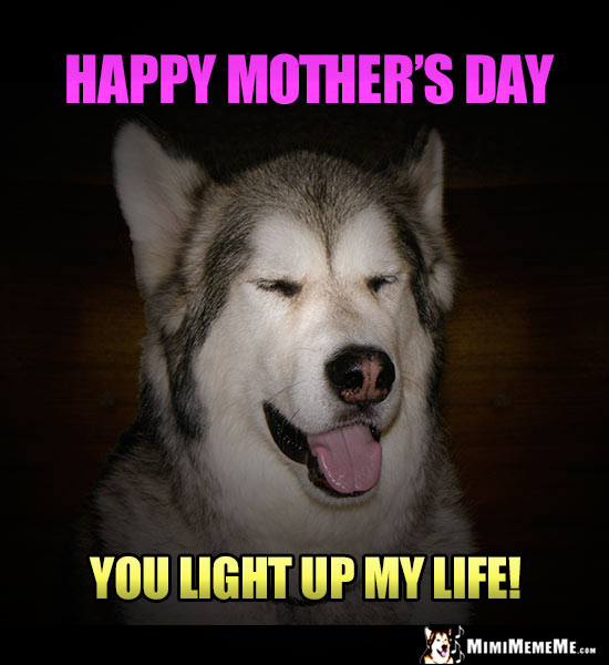 Handsome Dog Says: Happy Mother's Day. You Light Up My Life!