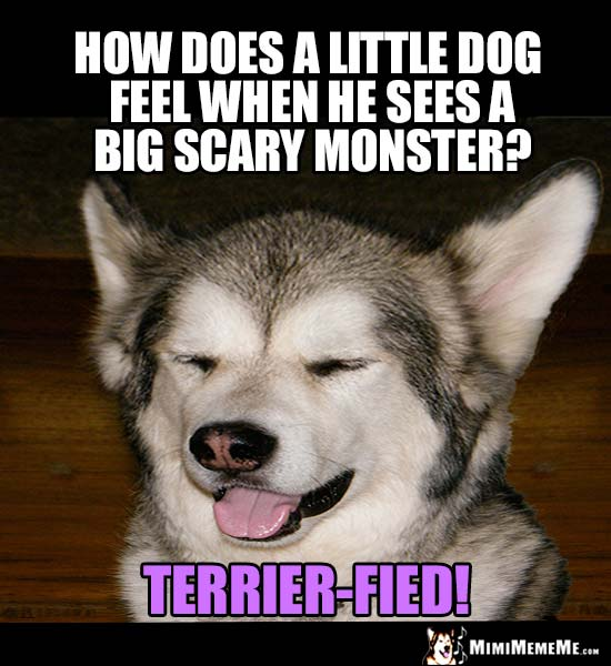 Dog Joke: How does a little dog feel when he sees a big sarey monster? Terrier-fied!