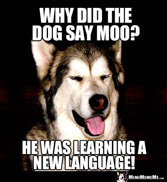 Dog Riddle: Why did the dog say moo? He was learning a new language!