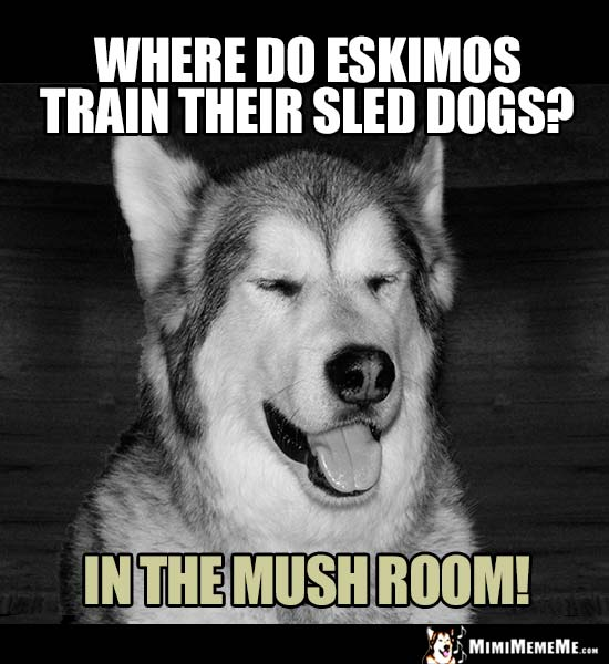Dog Joke: Where do Eskimos train their sled dogs? In the mush room!