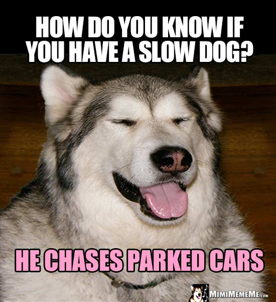 Dog Joke: How do you know if you have a slow dog? He chases parked cars