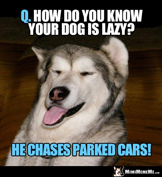 Dog Riddle: Q. How do you know your dog is lazy? A. He chases parked cars!