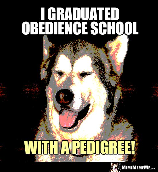 Dog Joke: I graduated obedience school with a pedigree!