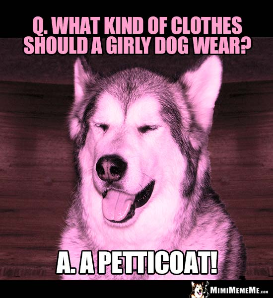 Dog Riddle: What kind of clothes should a girly dog wear? A petticoat!