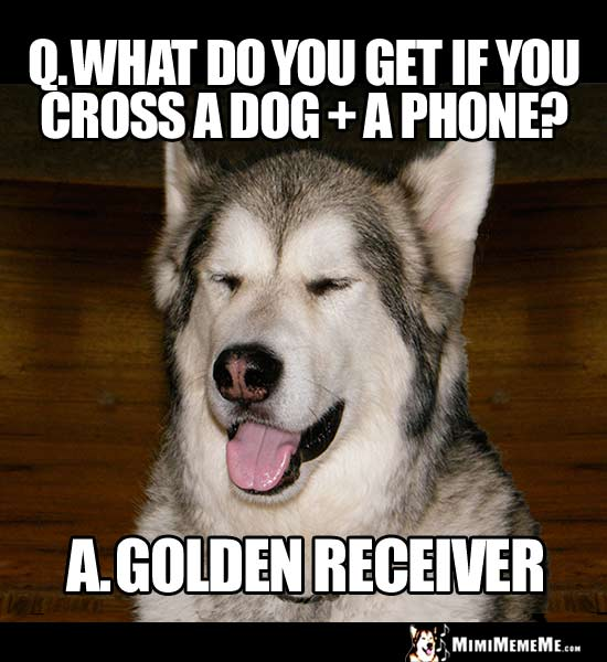 Dog Riddle: What do you get if you cross a dog + a phone? A Golden Receiver
