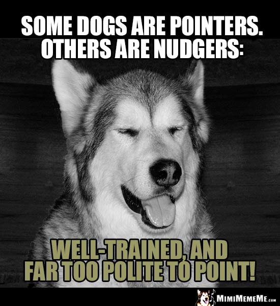 Dog Humor - Some dogs are pinters. Others are Nudgers: Well-trained, and far too polite to point!