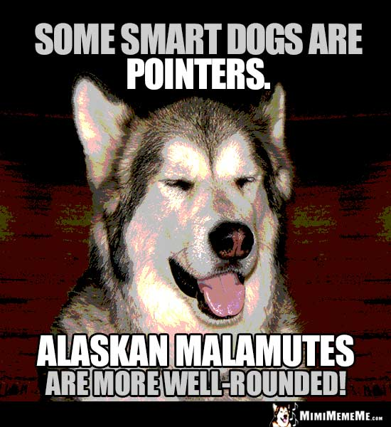 Dog Humor: Some smart dogs are pointers. Alaskan Malamutes are more well-rounded!