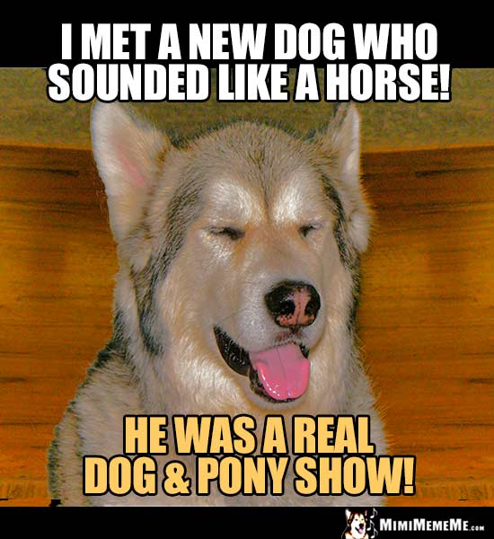 Dog Humor: I met a new dog who sounded like a horse? He was a real dog & pony show!