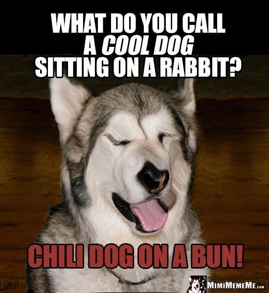 Dog Riddle: What do you call a cool dog sitting on a rabbit? Chili Dog on a Bun!