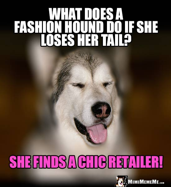 Dog Humor: What does a fashion hound do if she loses her tail? She finds a chic retailer!