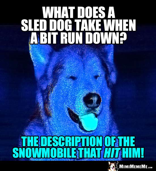 Dog Joke: what does a sled dog take when a bit run down? The description of the snowmobile that hit him!