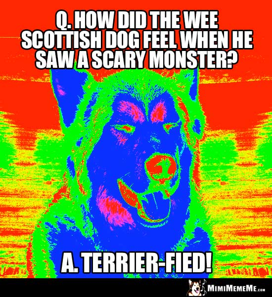 Dog Riddle: How id the wee scottish dog feel when he saw a scary monster? Terrier-Fied!