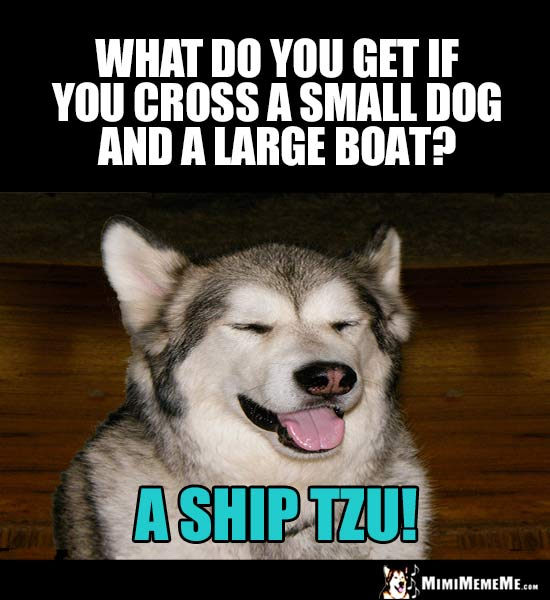 Dog Riddle: What do you get if you cross a small dog and a large boat? A Ship Tzu!