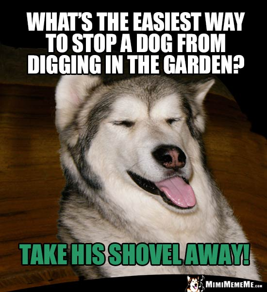 Dog Humor: What's the easiest way to stop a dog from digging in the garden? Take his shovel away!