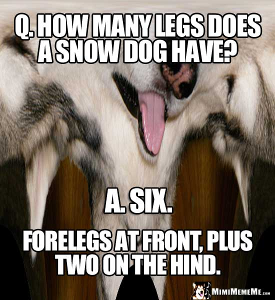 Dog Joke: How many legs does a snow dog have? Six. Forelegs at front, plus two on the hind.