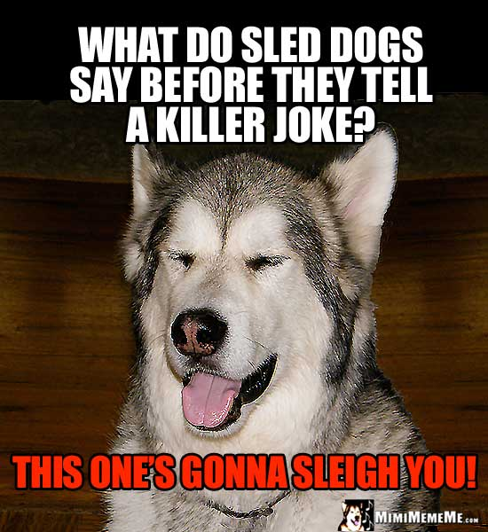 Dog Humor: What do sled dogs say before they tell a killer joke? This one's gonna sleight you!