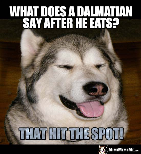 Dog breed Riddle: What does a Dalmatian say after he eats? That hit the spot!