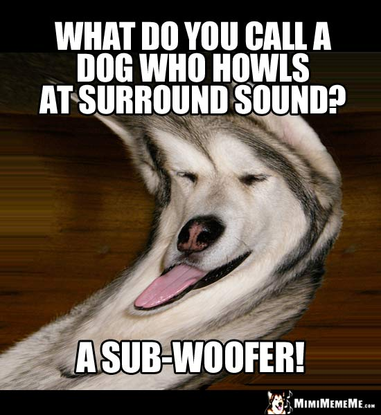 Dog Humor: What do you cal a dog who howls at surround sound? A sub-woofer!