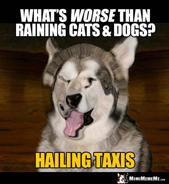 Corny Dog Riddle: What's worst than raining cats & dogs? Hailing taxis