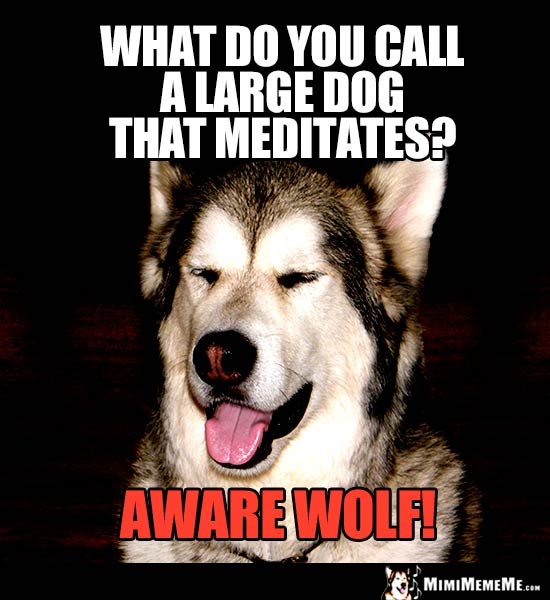 Halloween Dog Joke: What do you call a large dog that meditates? Aware Wolf!