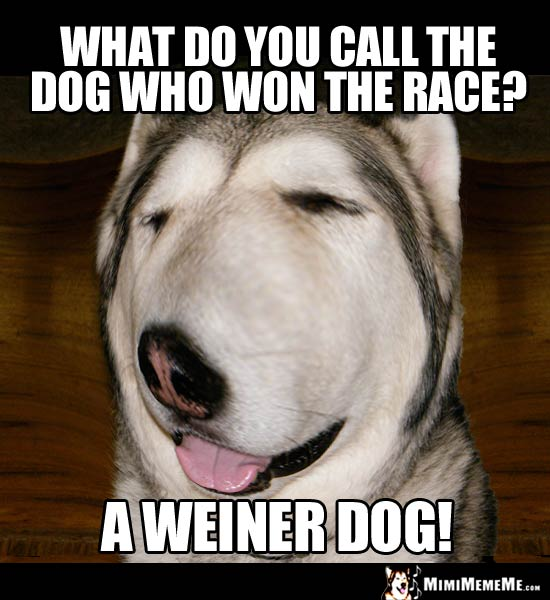 Silly Dog Riddle: What do you call the dog who won the race? A Weiner Dog!