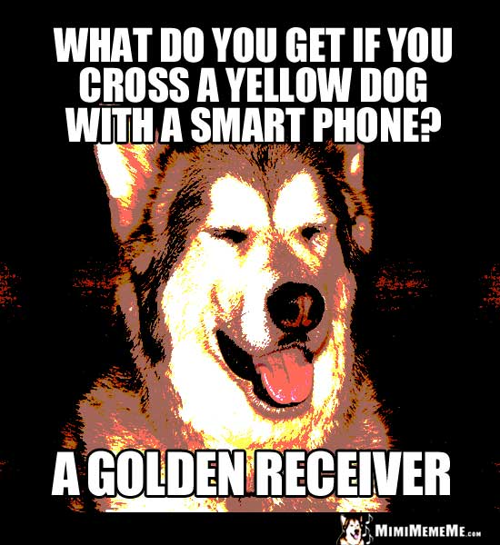 Dog Riddle: What do you get if you cross a yellow dog with a smart phone? A Golden Receiver