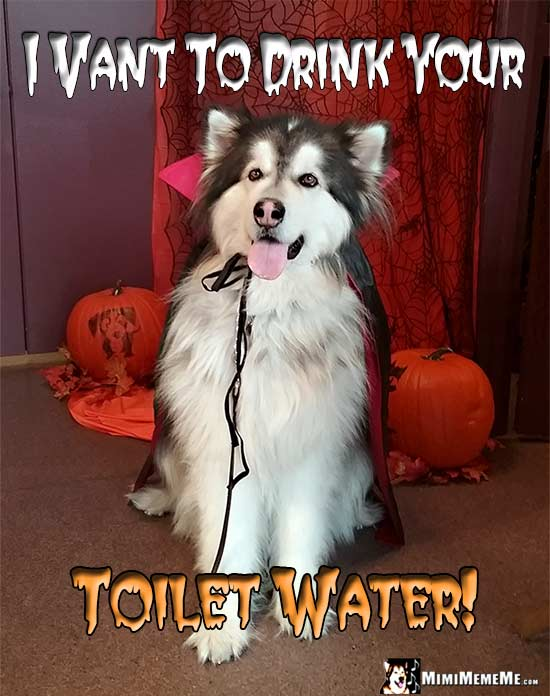 Halloween Vampire Dog Says: I vant to drink your Toilet Water!