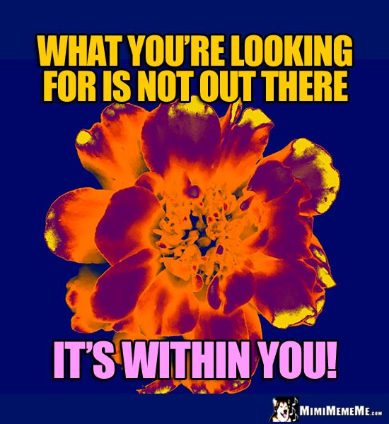 Xray Flower Saying: What you're looking for is not out there. It's within you!