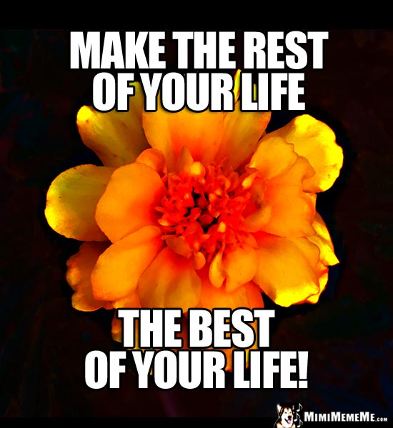 Motivational Thoughts from a Flower: Make the rest of your life the best of your life!