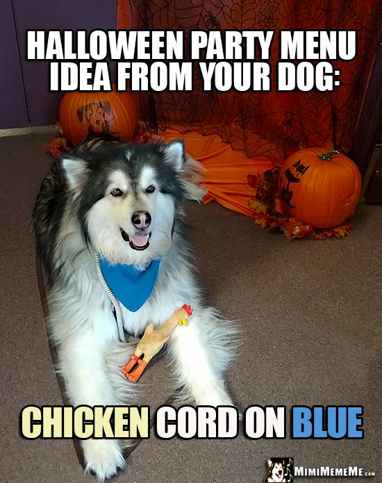 Dog with Rubber Chicken, Cord, Blue Napkin Says, Halloween party menu idea from your dog: Chicken Cord on Blue