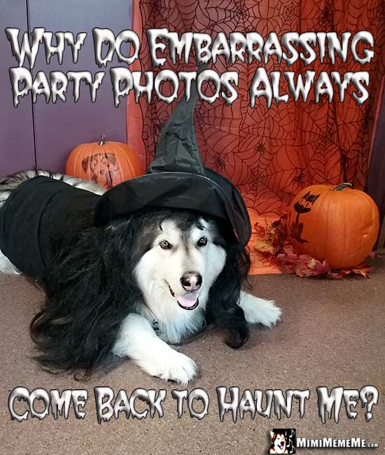 Dog Wearing Witch Costume Jokes: Why do embarrassing party photos always come back to haunt me?