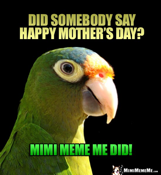 Parrot Asks: Did Somebody Say Happy Mother's Day? Mimi Meme Me Did!