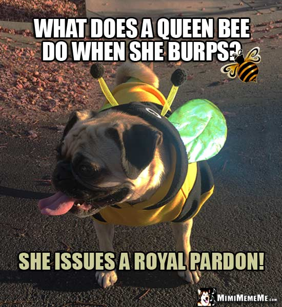 Pug in Bee Costume Joke: What does a queen bee do when she burps? She issues a royal pardon!