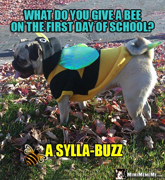 Pug Dressed Like a Bee Jokes: What do you give a bee on the first day of school? A Sylla-Buzz