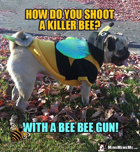 Pug Wearing Bee Costume Asks: How do you shoot a killer bee? With a bee bee gun!