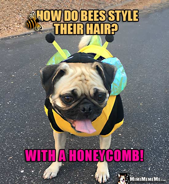 Pug Dressed Like a Bee Asks: How do bees style their hair? With a honeycomb!