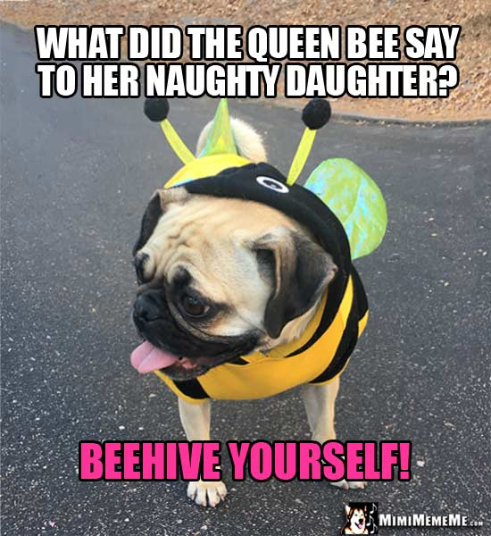 Pug in Bee Costume Asks: What did the queen bee say to her naughty daughter? Beehive yourself!