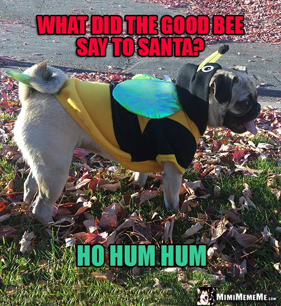 Pug Wearing Bee Outfit: What did the good bee say to Santa? Ho Hum Hum