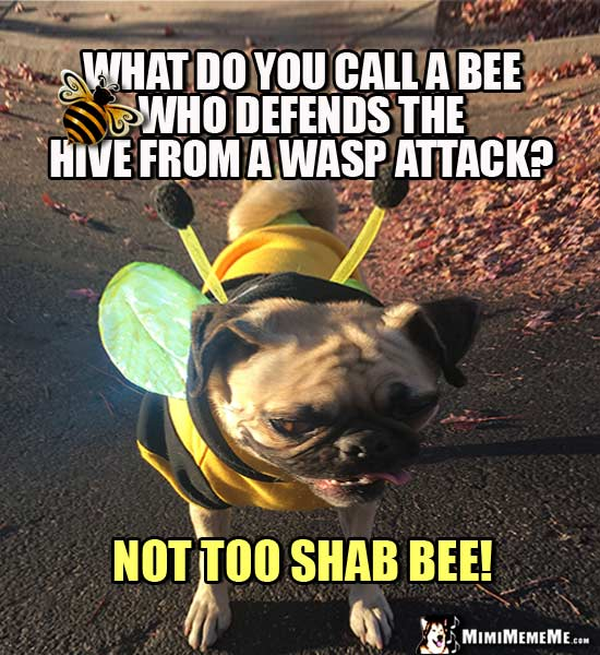 Pug in Bee Costume Asks: What do you call a bee who defends the hive from a wasp attack? Not too shab bee!
