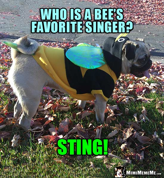Pug Wearing Bee Costume Riddle: Who is a bee's favorite singer? Sting!