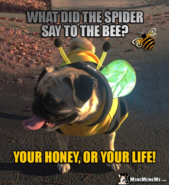 Pug in Bee Costume: What did the spider say to the bee? Your honey, or your life!
