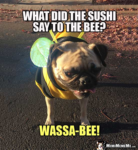 Pug Dressed as Bee Asks: What did the sushi say to the bee? Wassa-Bee!