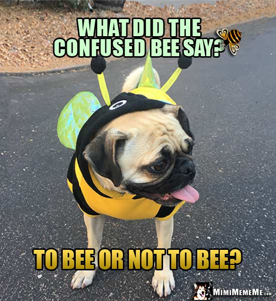 Pug in Bee Costume Asks: What did the confused bee say? To Bee or Not to Bee?