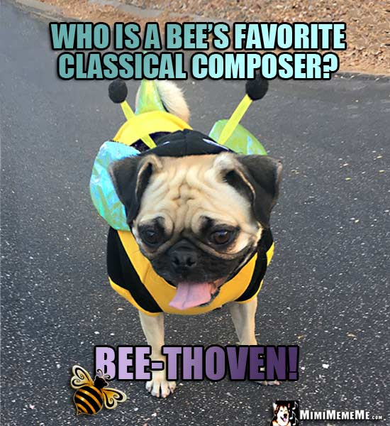Pug Dressed Like a Bee Asks: Who is a bee's favorite classical composer? Bee-Thoven!
