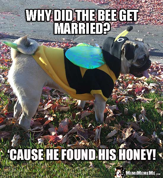 Pug Wearing Bee Costume Asks: Why did the bee get married? 'Cause he found his honey!